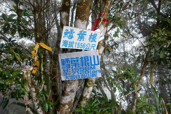 Two signs with Chinese writing and several ribbons attached to trees