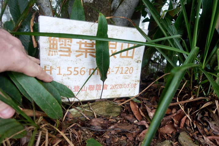 White sign with Chinese writing leaning against a tree - grass blades in front