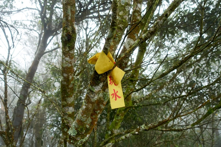 Yellow ribbon attached to a tree - foggy