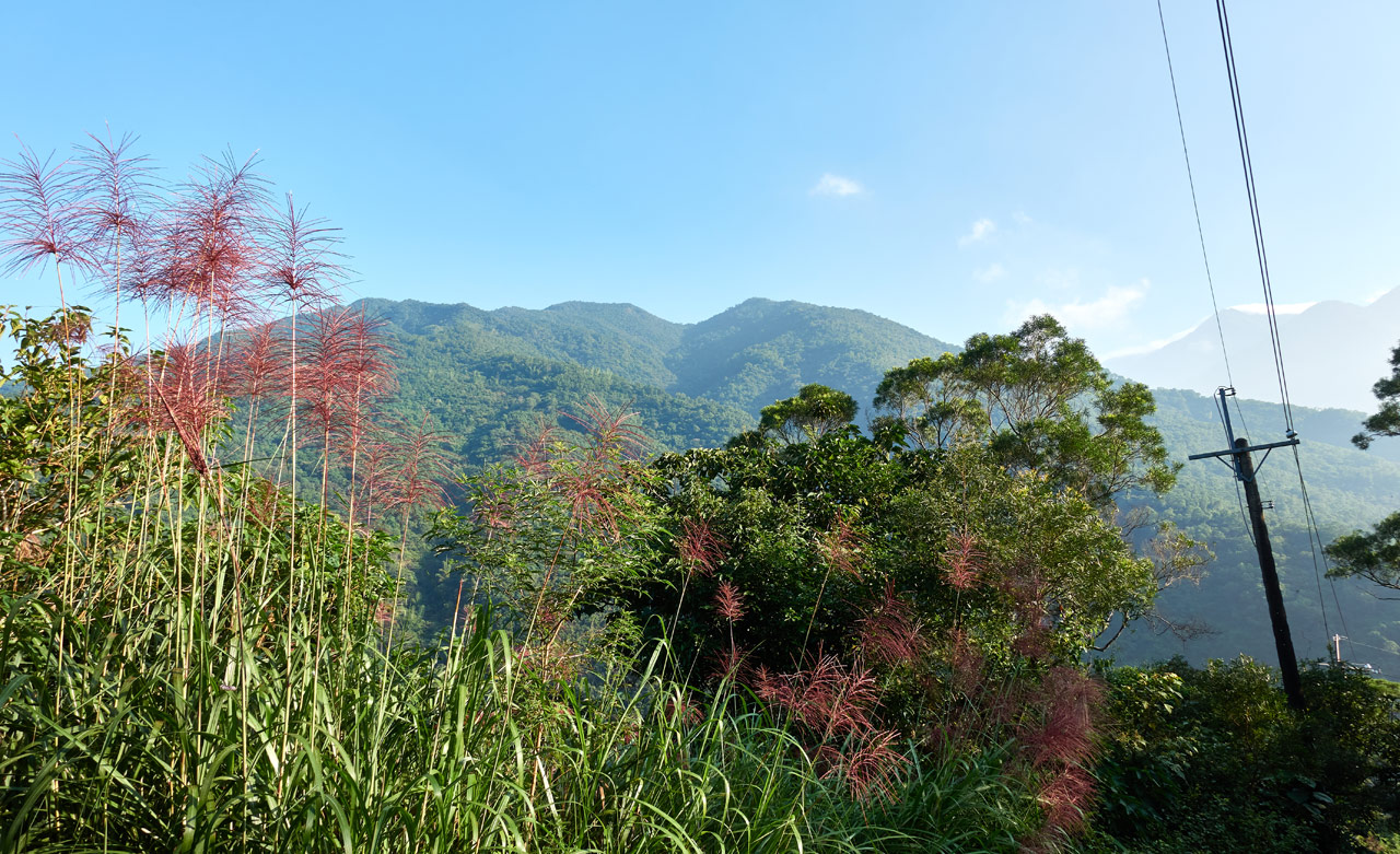 Mountain landscape - blue sky - trees and plants in foreground