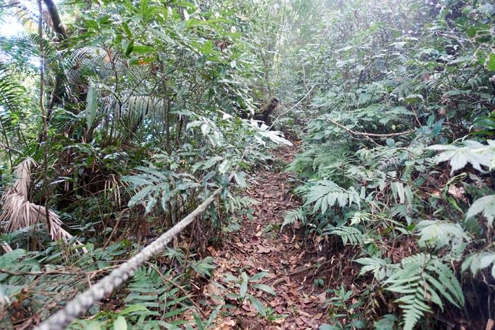Trail in center with rope on the left going up mountain - trees and plants all around