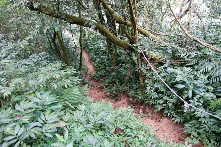 Wet dirt trail with trees and vegetation on either side - ropes attached to the trees