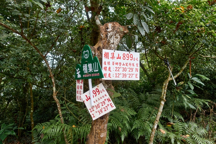 Many signs attached to a tree - PengJiShan - 棚集山