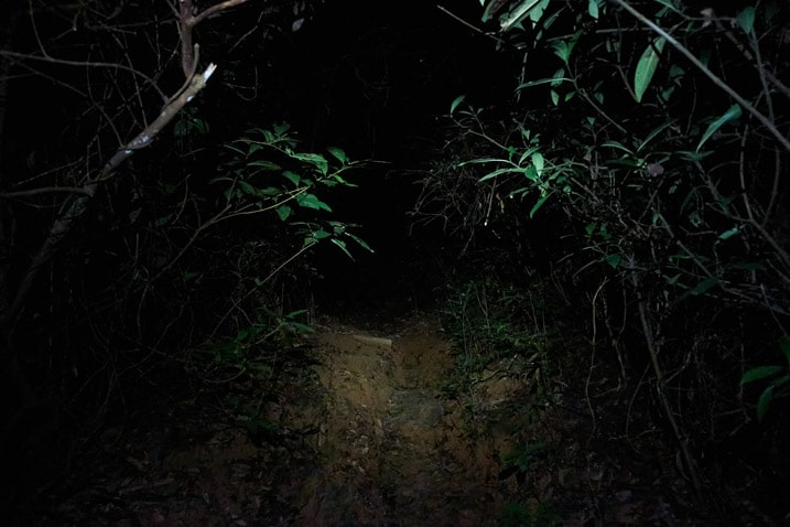 Dirt trail lit up by headlamp in the dark - very dark - vegetation on either side
