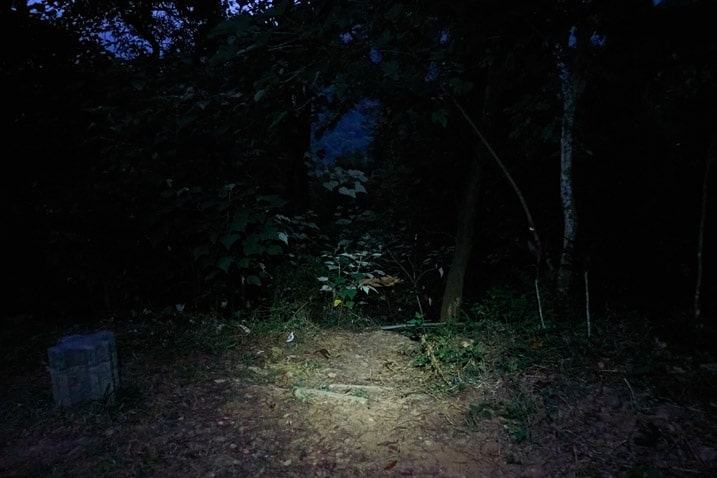 """Trees and vegetation in dark lit up by headlamp - small concrete """"stool"""" off to the left"""