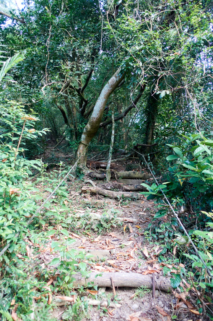 Hiking path up mountain - ropes on either side and stairs - many trees
