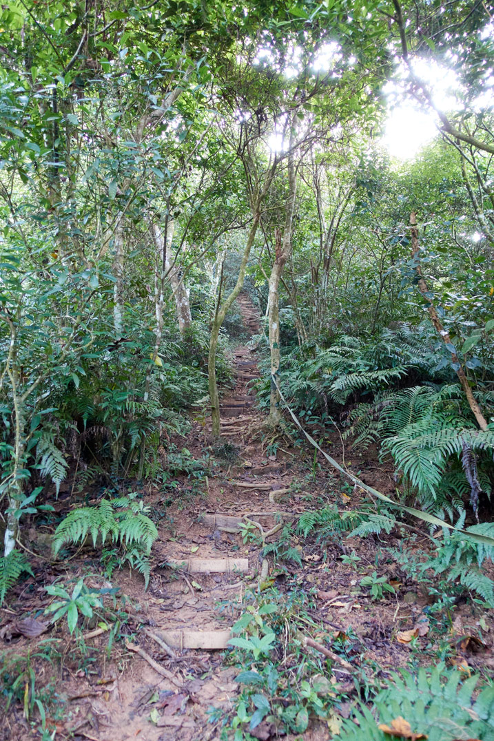 Hiking path up mountain - rope and steps made - many trees