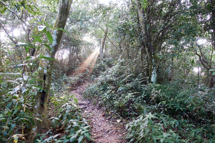 Mountain trail - trees and vegetation on either side - sunbeam breaking through the canopy
