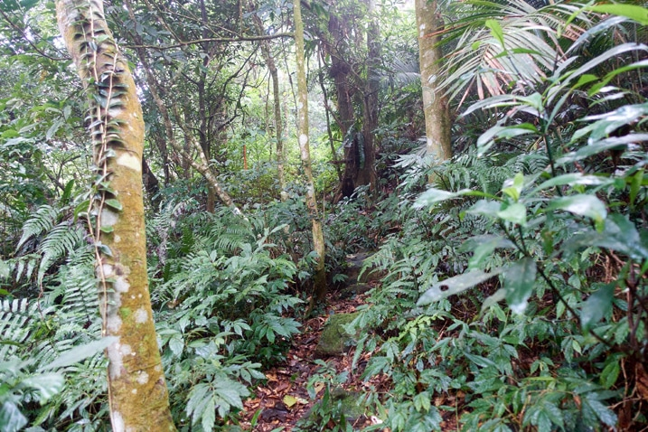 Mountain trail - Many trees and plants on either side
