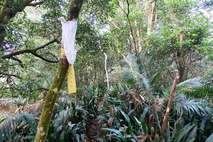 Yellow ribbon attached to tree - Many plants and trees around