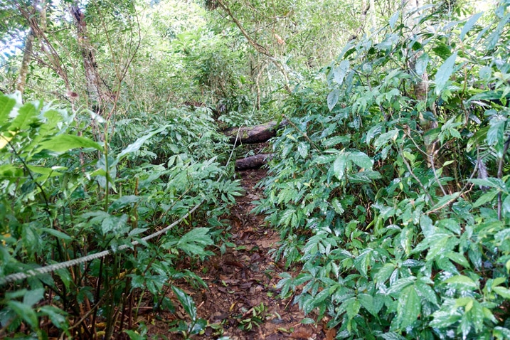 Trail going up mountain - rope - a lot of vegetation