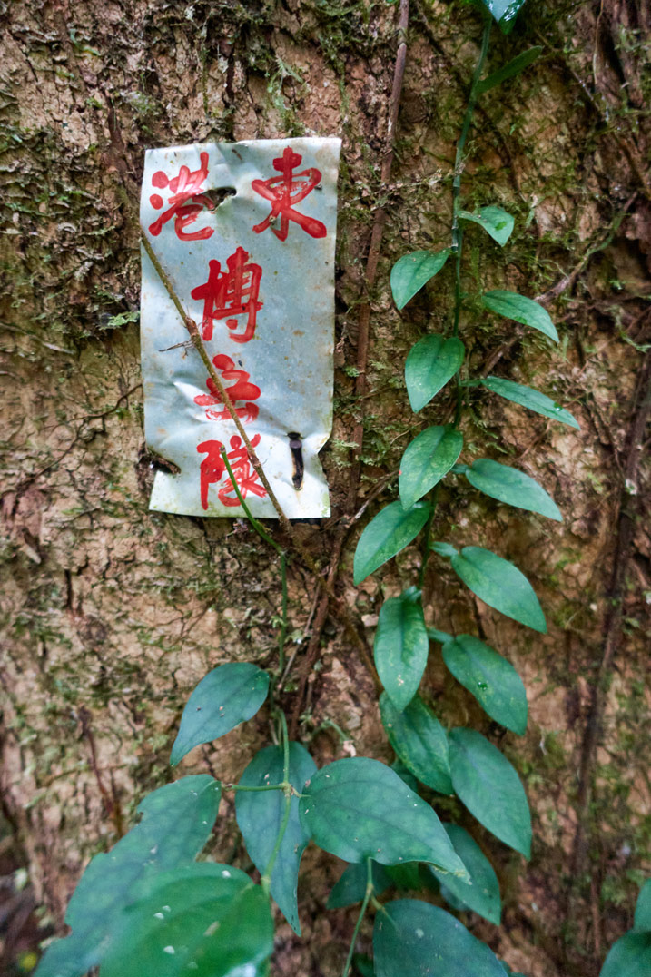 Metal sign attached to tree with red Chinese characters written on it - vine growing on tree