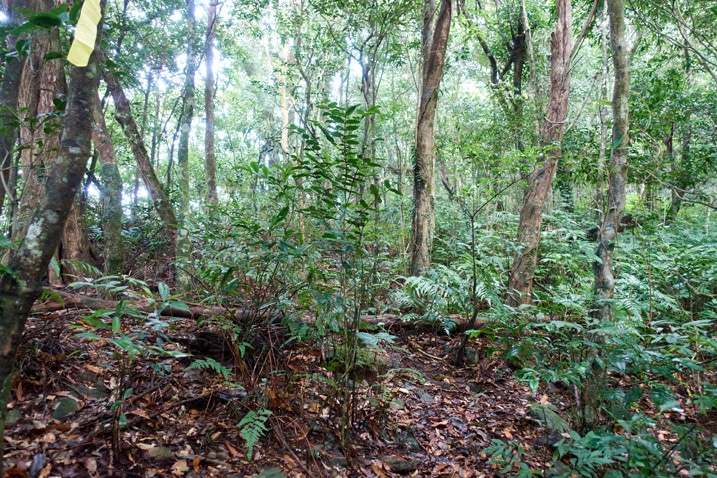 Mountain trail - many trees and vegetation