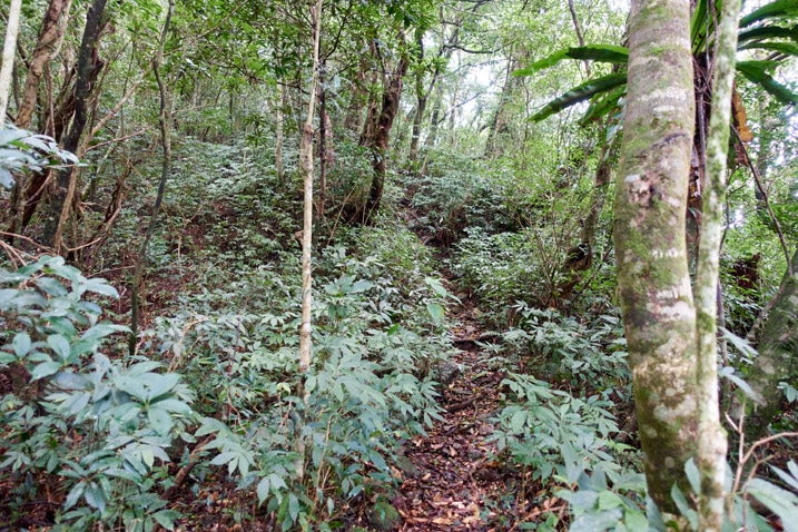Single track mountain trail with vegetation and trees on either side