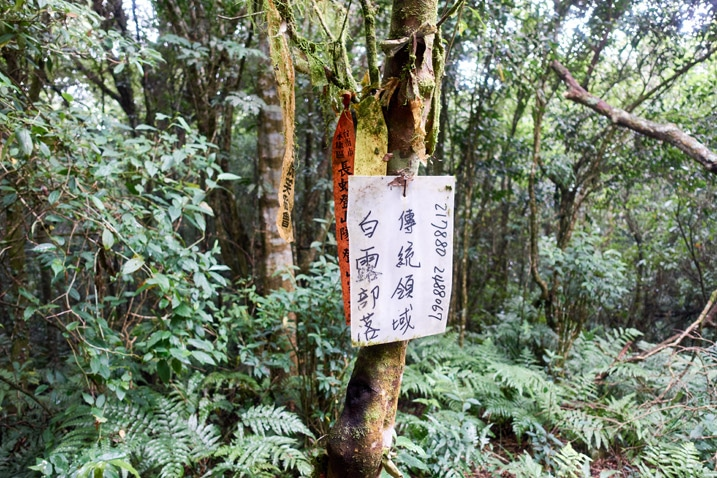 White sign with chinese writing attached to a tree - yellow and red ribbons attached to tree - many trees behind
