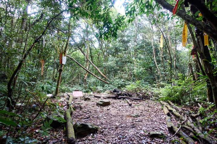 Open area on mountain top - many trees all around - triangulation stone in center - JiuBaoShan 久保山