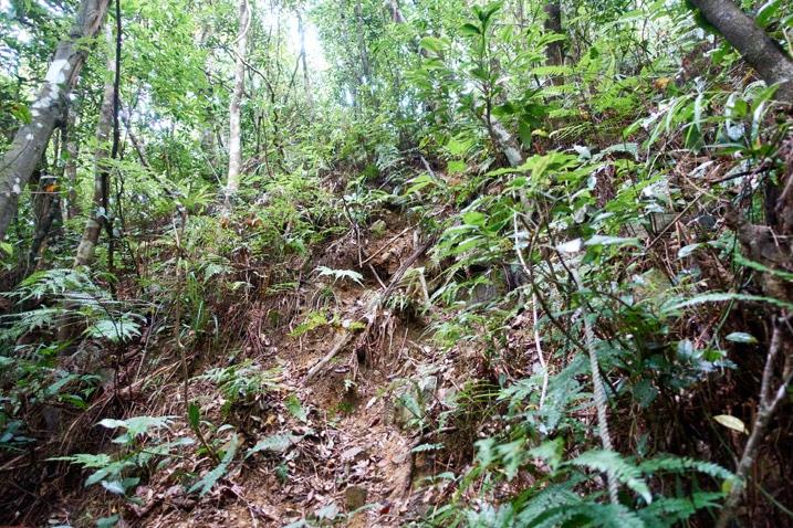 Looking up at muddy, steep trail - many trees