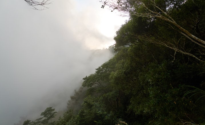 Looking out from mountain ledge - lots of fog - sky somewhat visible at top - trees on left side
