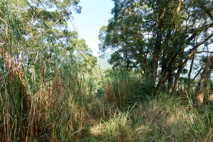 Mountain ridge with tall grass and trees on either side