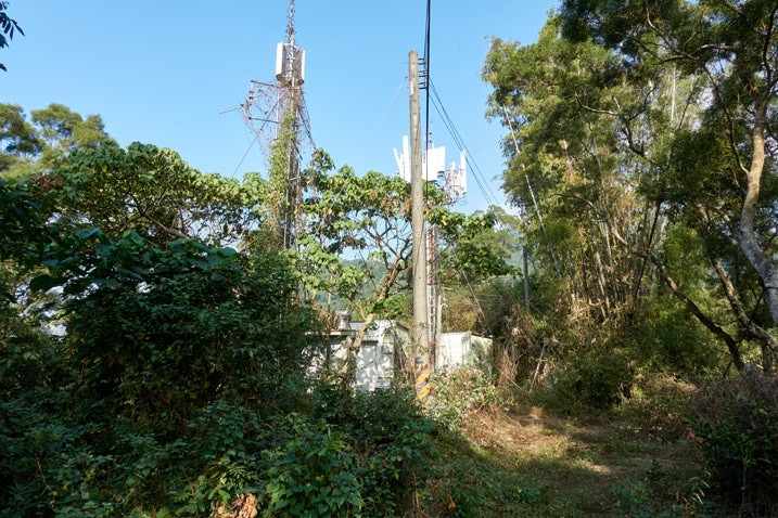 Cellphone tower mixed in with trees and plants on mountain ridge