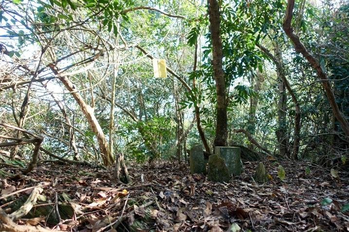 DaLaiShan North Peak - 達來山北峰 - Peak marker stone - leaves all over the ground and trees all around