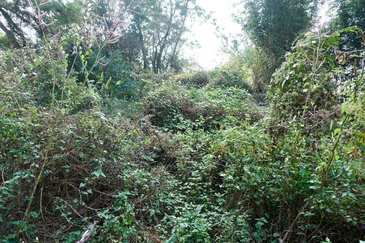 Jungle on mountain ridge