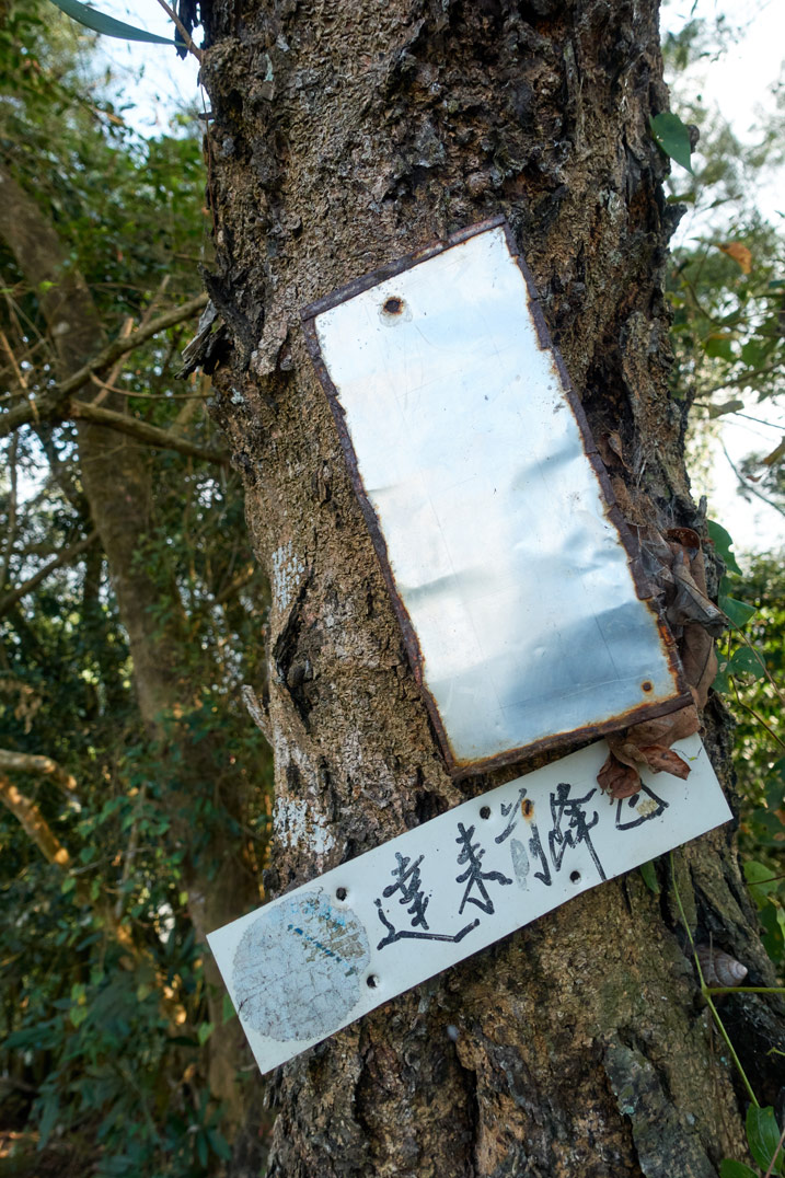 Two signs attached to a tree - one with chinese writing, another the writing has worn away