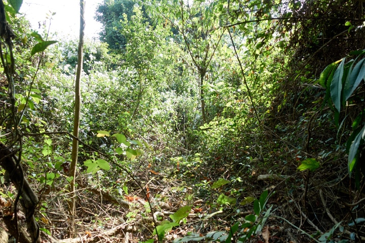 Mountain ridge jungle - many trees and plants all over