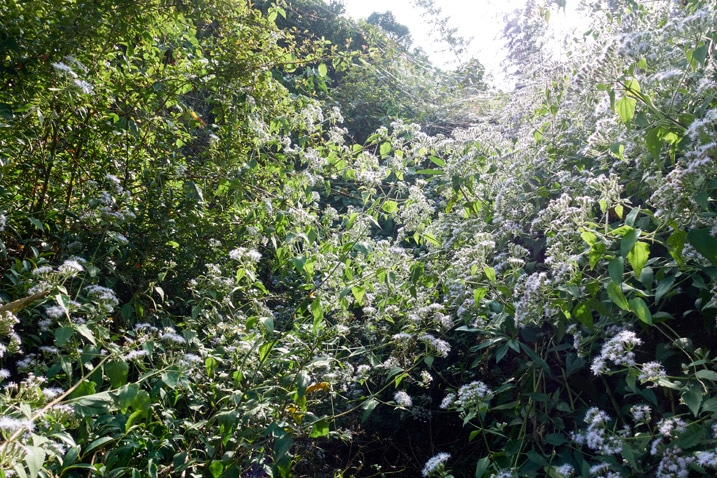 Mountain ridge jungle - many flowery plants