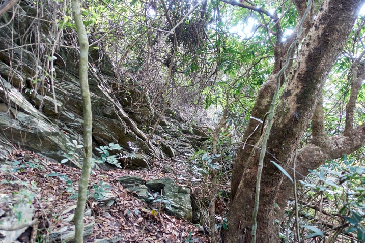Rocky trail with lots of little trees and vines on either side