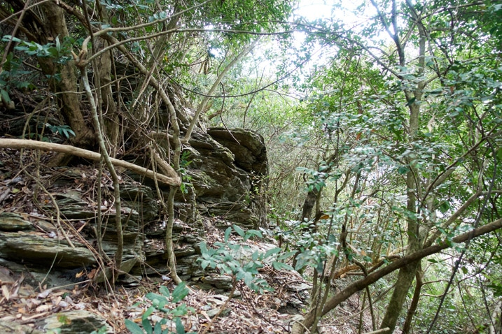 Rocky ridge trail - trees and vines all over
