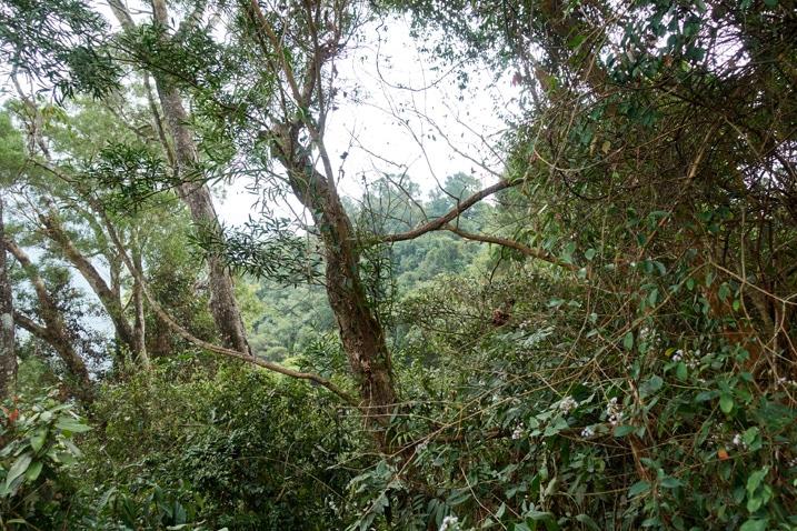 Jungle mountain ridge - lots of trees, vines, and vegetation