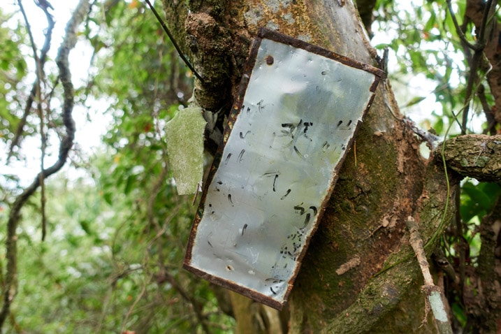 Old metal homemade sign attached to a tree - Chinese word in black marker are faded and difficult to read