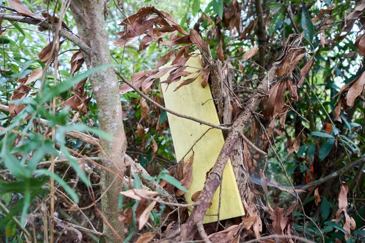 Yellow sign long faded blank attached to a tree - dead leaves in front of sign