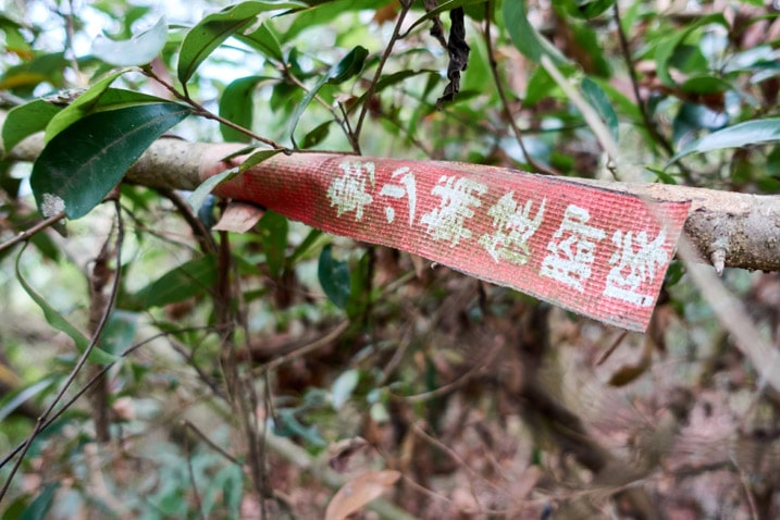 Old red ribbon with white chinese writing attached to tree