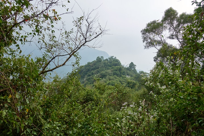 Small mountain peak nearby - trees in foreground