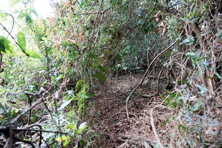 Mountain ridge jungle of entangled trees and vines