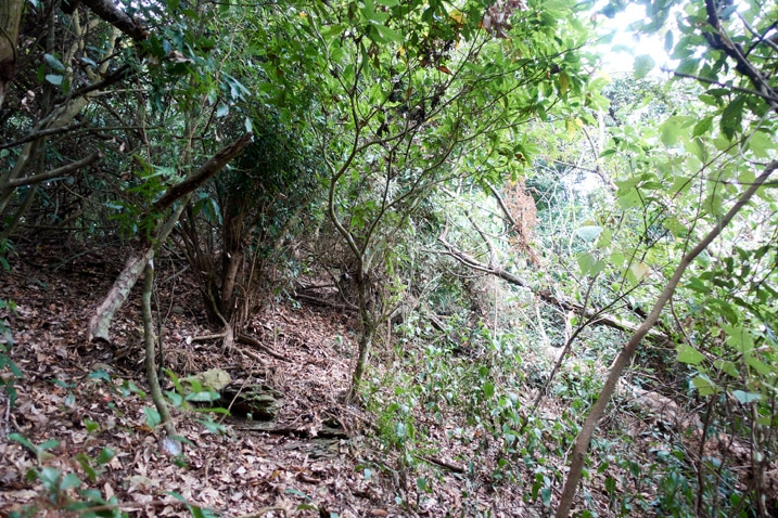 Trees and vines on mountain ridge - dense