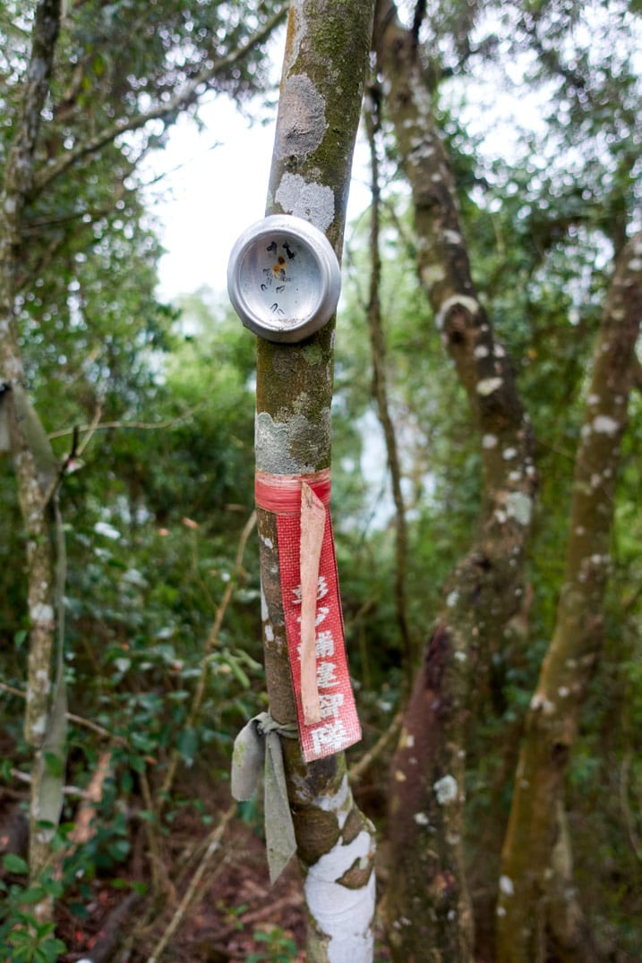 Bottom of soda can with faded Chinese writing attached to tree - red ribbon with white Chinese writing attached to tree below the can