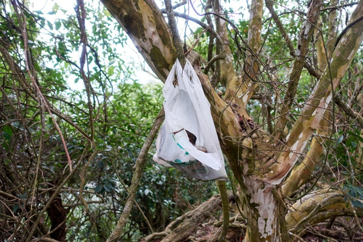 White plastic bag tied to a tree - garbage in bag