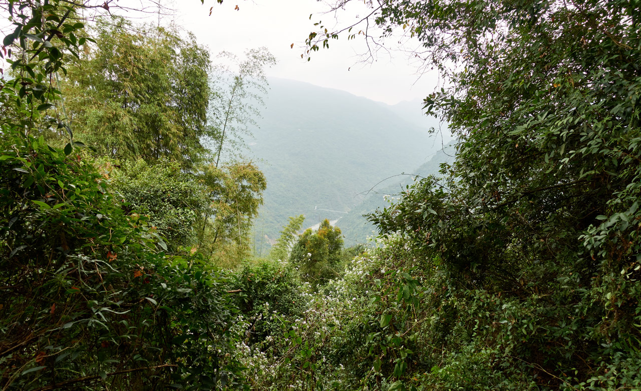 Mountain and bridge in the distance - trees in foreground obscuring the mountains
