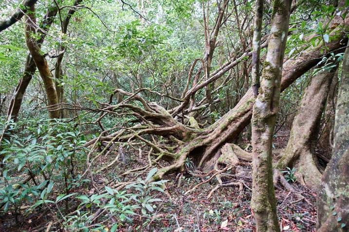 Mountain ridge forest - dense trees