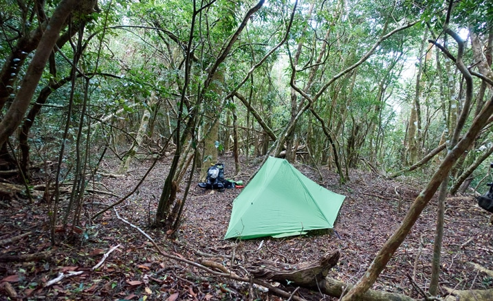 Green tent in forest - backpack behind it - many trees all around