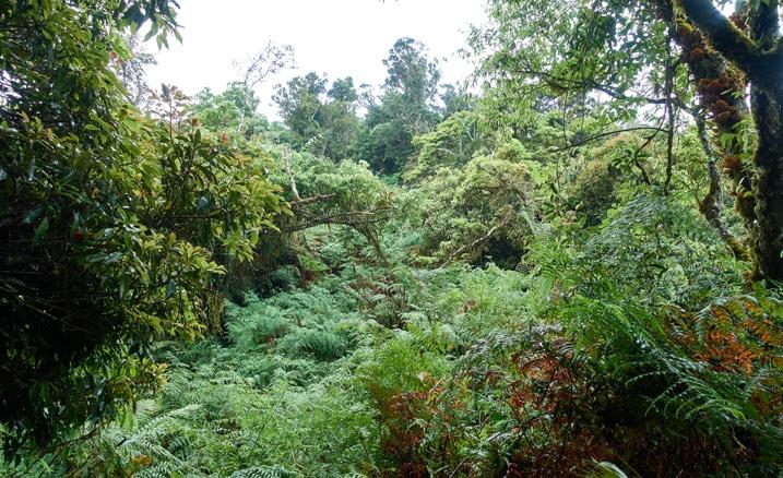 Mountain ridge jungle