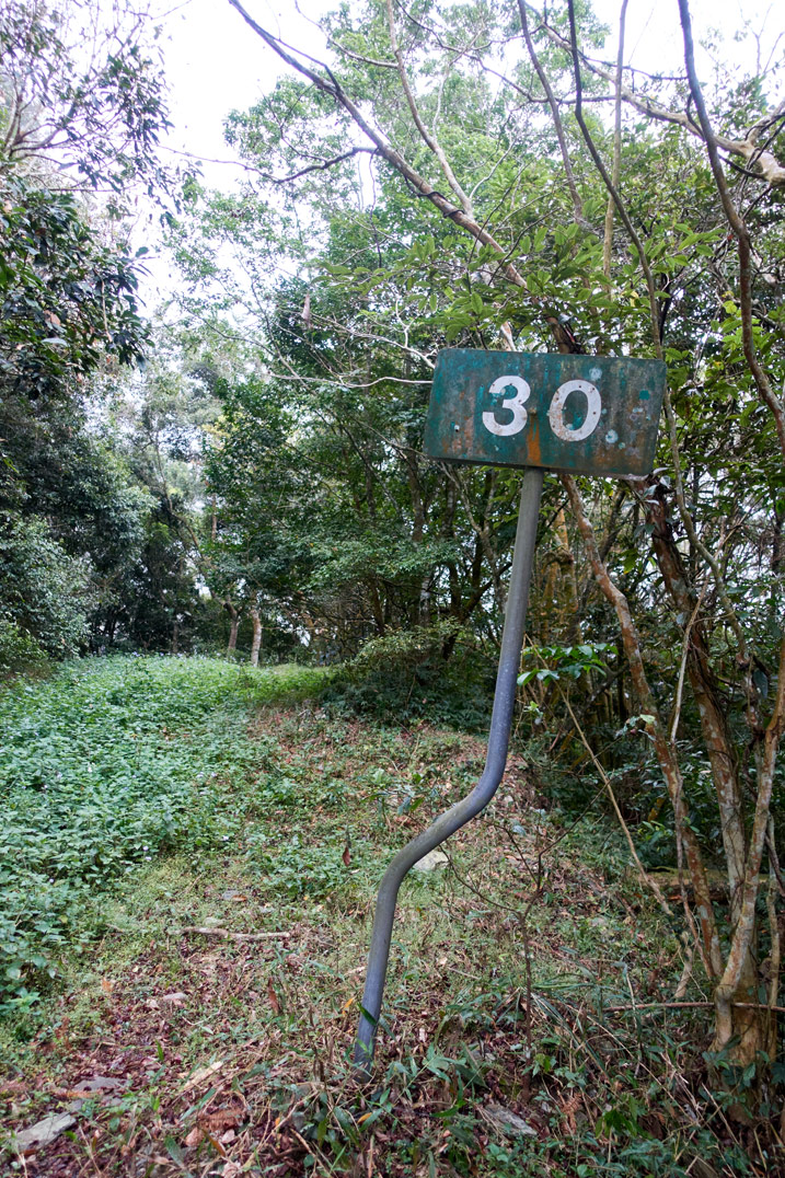 """Old road sign with """"30"""" written on it - old dirt road covered in grass - trees on either side"""