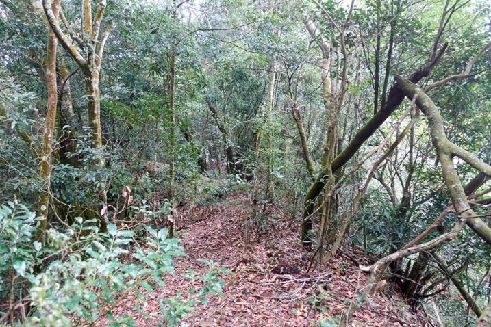 Looking down a mountain ridge - many trees