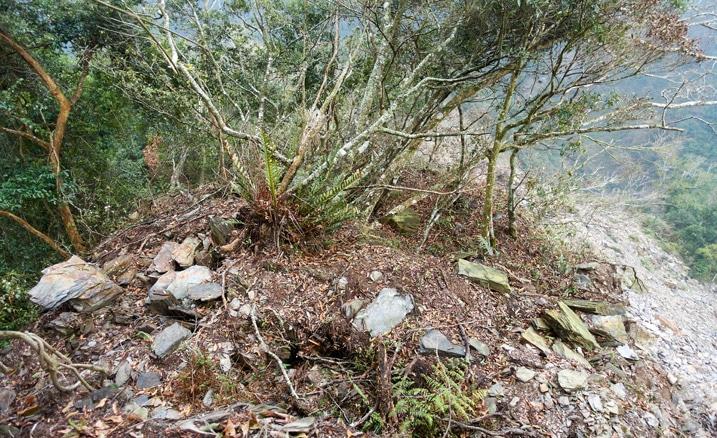 Mountain ridge - many trees and rocks