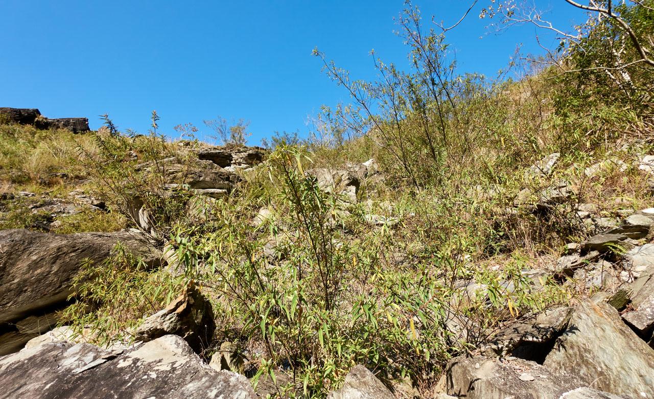 Looking up at rock slide - lots of plants growing in the rocks - blue sky