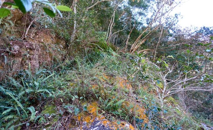 Looking up at side of mountain - lots of trees and vegetation
