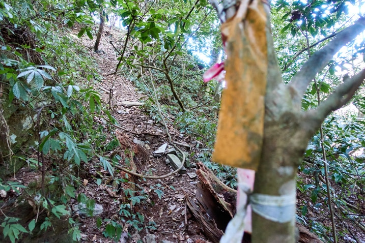 Trail going up wooded mountain - old orange and faded red trail ribbons attached to tree blurry in foreground